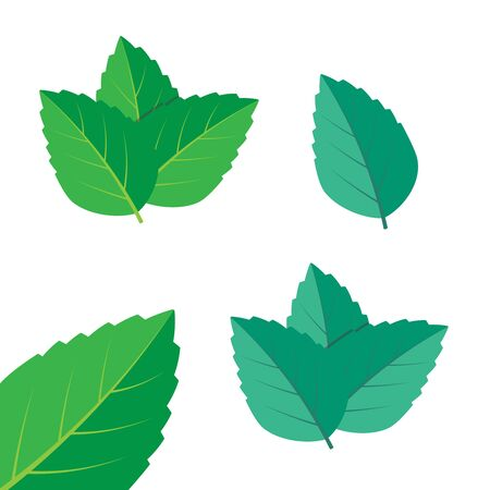 Mint green vector illustration set. Mint  vector  イラスト・ベクター素材