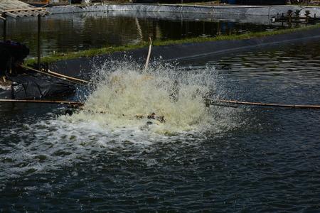 farming area: windmill for shrimp farming in the area of Kulon Progo. many pools there
