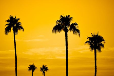 golden sunset with palm trees silhouette