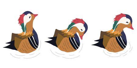 hand drawn three mandarin ducks vector illustration. creative  animal designs for fabric, wrapping, wallpaper, textile, apparel.