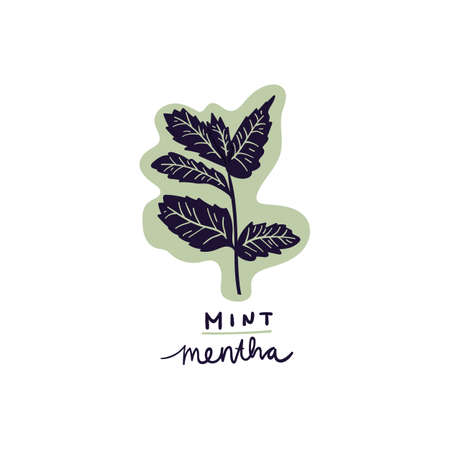 hand drawn herb mint leaves vector illustration. Creative herb texture for fabric, wrapping, textile, wallpaper, apparel. Ilustrace
