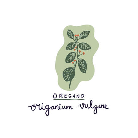 hand drawn herb oregano vector illustration. Creative herb texture for fabric, wrapping, textile, wallpaper, apparel.