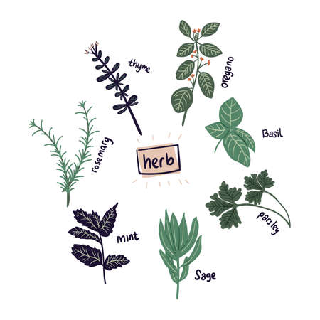 hand drawn herb rosemary,parsley,mint,sage,basil,thyme,oregano Vector illustration. Creative herb texture for fabric, wrapping, textile, wallpaper, apparel.