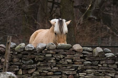 One horse standing behind the aged stone wall Stock Photo