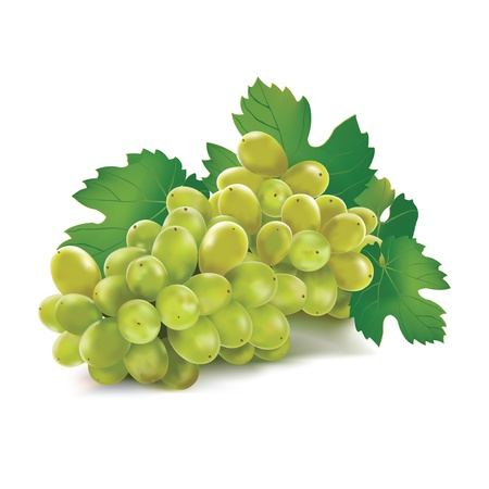 Grape. Vector. Mesh