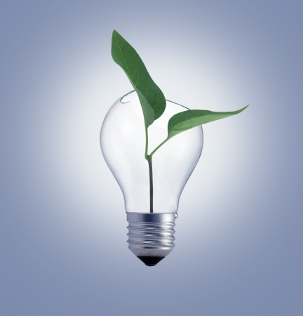 Bulb with green plant photo