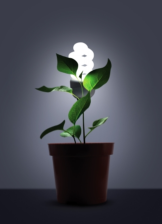 pot light: Sprout in flower pot with white light bulb Stock Photo