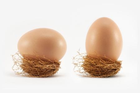 Egg in nest on white Banque d'images