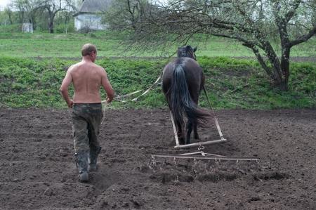 arando: Arado del campo con los caballos