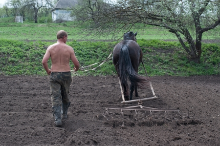 clydesdale: Ploughing the Field with Horses