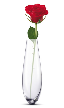 Rose in a white vase, isolated.illustration Vector