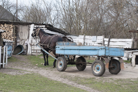 cartage: Horse with a cart Stock Photo