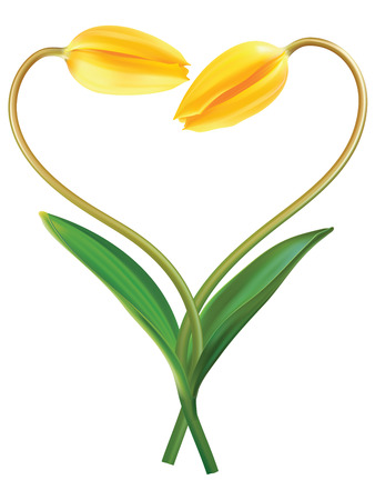 bosom: Heart from two tulips. Idea for Valentines day. Vector illustration Illustration