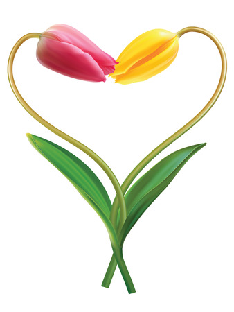 bosom: Coraz�n de dos tulipanes. Idea para el d�a de San Valent�n. Ilustraci�n vectorial