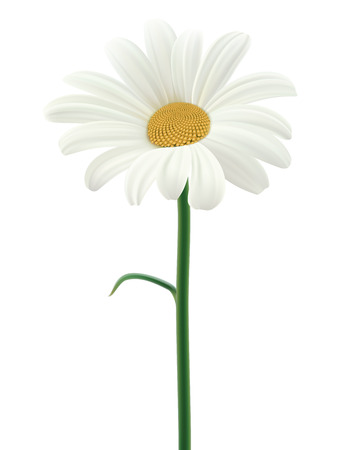 margerite: Daisy isolated. Vector illustration Illustration