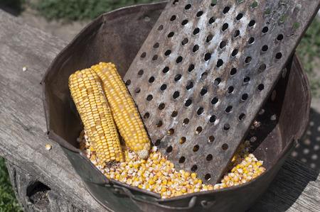 corncob: Raw golden corncob