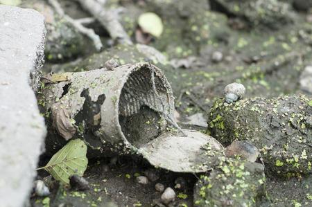 dumped: Rusty tin dumped in swampy
