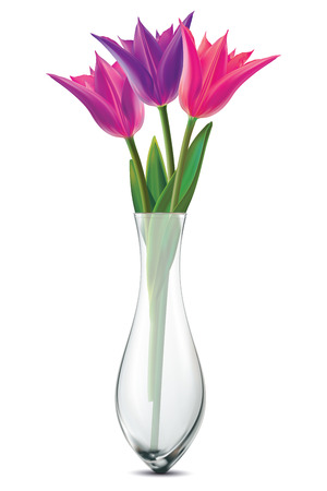 tulipa: Bouquet of tulips in a glass vase on a white