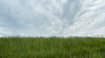 grey  sky: Green grass under grey sky