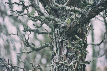Dead branches tree. Blurred dark background