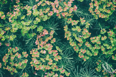 Plants for Background