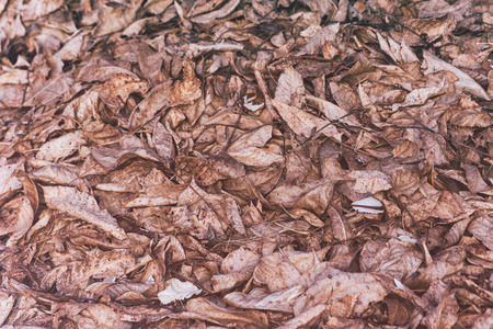 Dry old leaves on the floor background.
