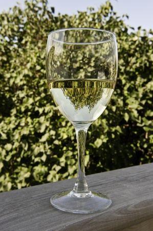 Trees reflecting in a glass of wine outside in the summer Stock Photo