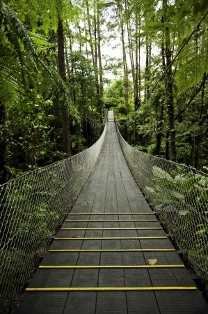 Hangbrug in het tropische regenwoud van Costa Rica Stockfoto - 11300373