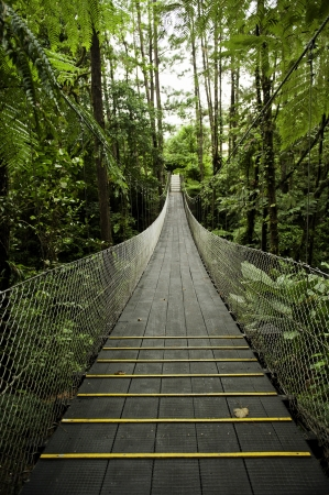 Suspension bridge in the tropical rainforest of Costa Rica photo