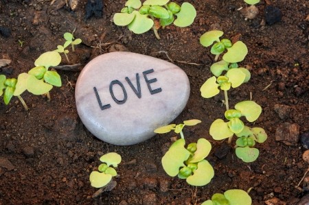 Sprouting plants surround a love message rock Imagens