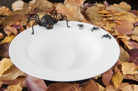 Halloween spinnen zitten op de rand van een lege witte schotel te wachten op voedsel Stockfoto
