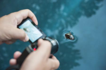 男の両手スイミング水カブトムシを撮影ビデオカメラ 写真素材