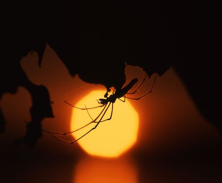 Silouette of a spider against a sunset