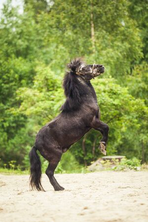 Black horse, pony in the green parc