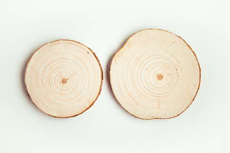 Two wood cuts, round shape on white background. Round wooden saw cuts.