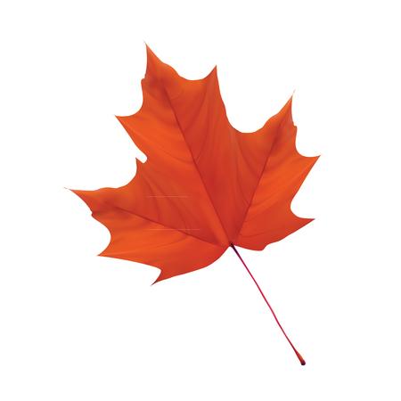 dark orange leaf vector with white background Illustration