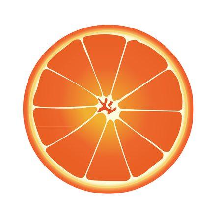 Half orange vector with white background