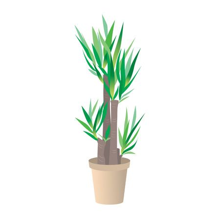 Home interior flower and office plant in pot Vector illustration. Illustration