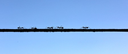 Ants walking on a rope that bound on the tree. Concept of business inspiration from nature