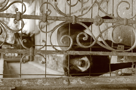 sad dog: Sad dog behind a metal fence in Romania Stock Photo
