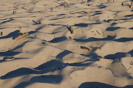 summer beach dune sand with wood debris Stock Photo