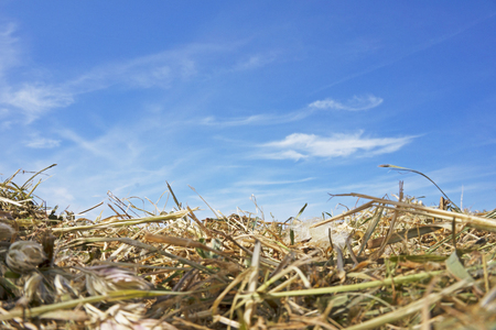 hay grass dries yellow clouds blue sky background wallpaper Stock Photo