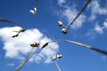 bent wisp blue sky white clouds from the bottom macro lens closeup close up
