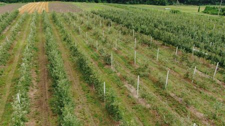 Aerial view of the Apple plantation. The cultivation of apples.