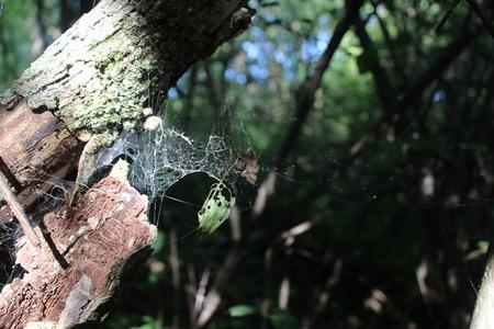 Spiderweb on tree branch Banco de Imagens