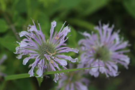Macro Photo of Purple Wild Flowers