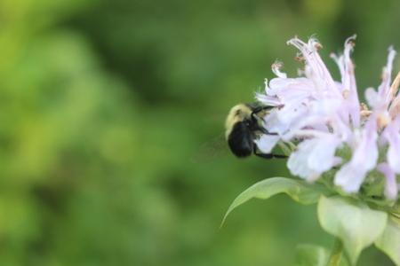 Bee Pollinates Wildflower Banco de Imagens - 82931399