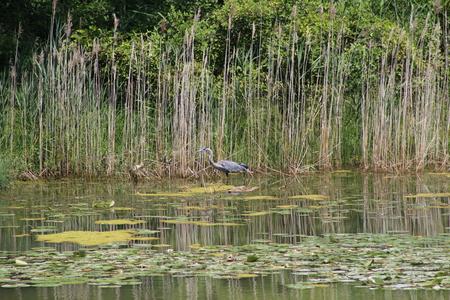 Crane bird sitting in pond at cottage