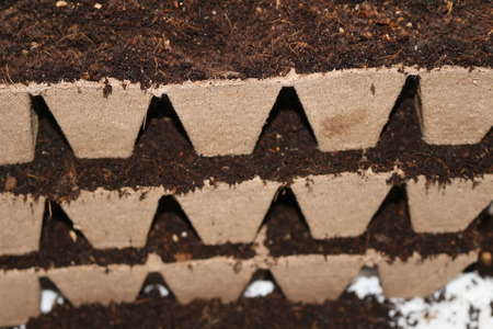 seedlings in peat pots.Baby plants seeding, black hole trays for agricultural seedlings.The spring planting. Early seedling , grown from seeds in boxes at home on the windowsill