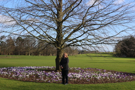 Women next to a tree with plenty of blooming crocus flowers, a park in Kilkenny Ireland